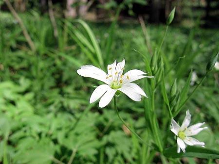 kwiat_450.jpg